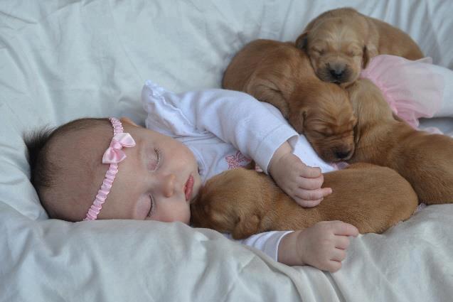 Bebé durmiendo con cachorros | Las mejores imágenes